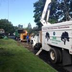 Lower NY state tree service company