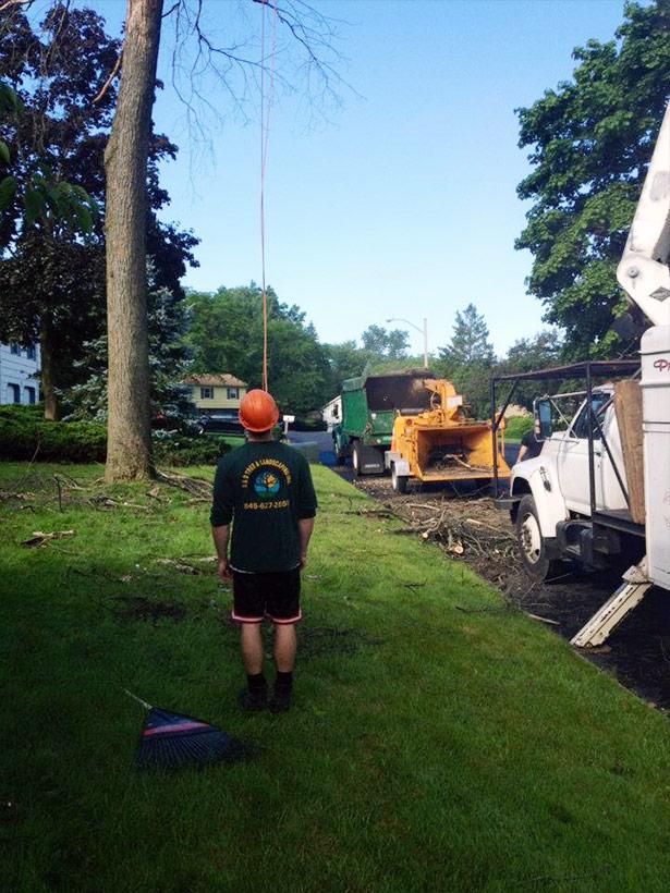 Rockland County NY tree work