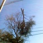 tree branch removal company NY