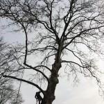 tree pruning company in NY
