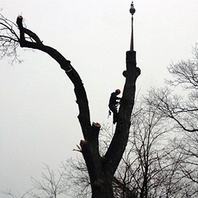 NY Tree Experts