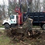 stump removal ny
