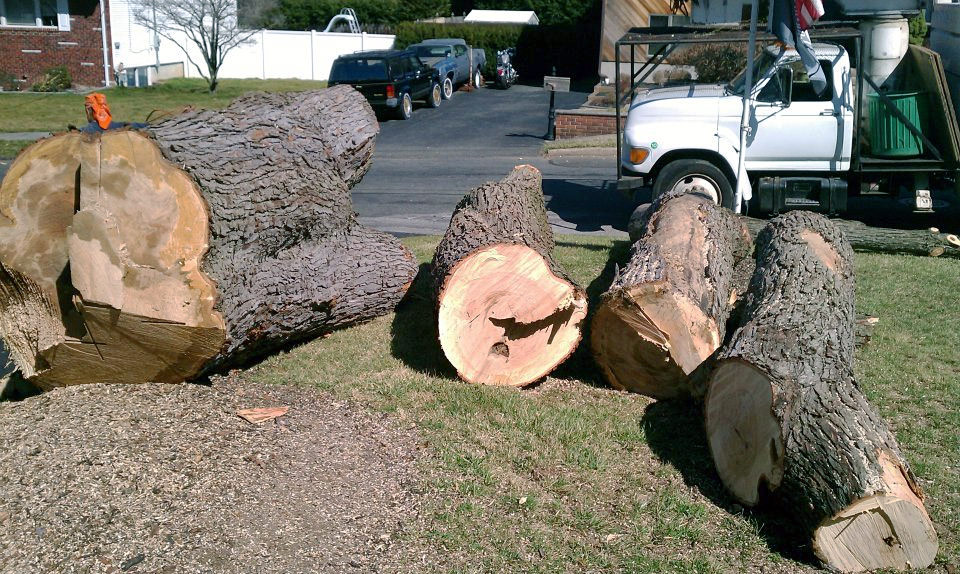 large tree cutting NY