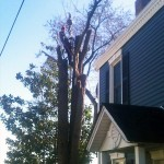 large tree removal companies NY state