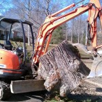 Rockland County NY stump removal