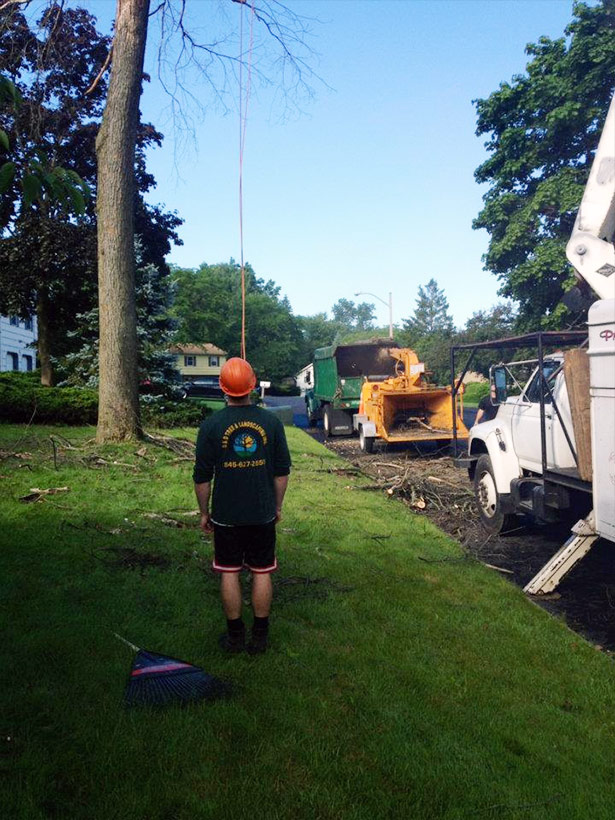 Rockland County NY tree work