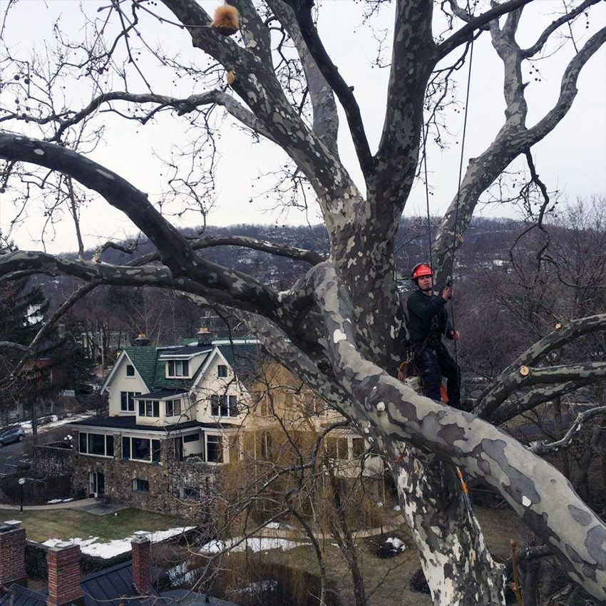 Westchester County tree service