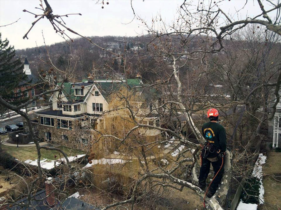 Rockland County tree services