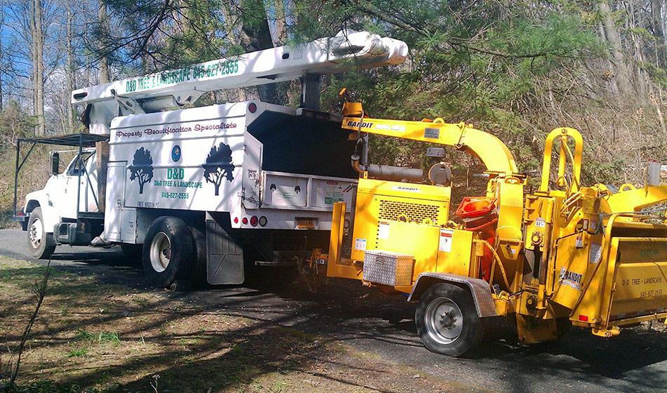 tree care company in NY