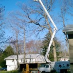 tree cutting in Rockland County NY