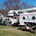tree cutting company Westchester County NY