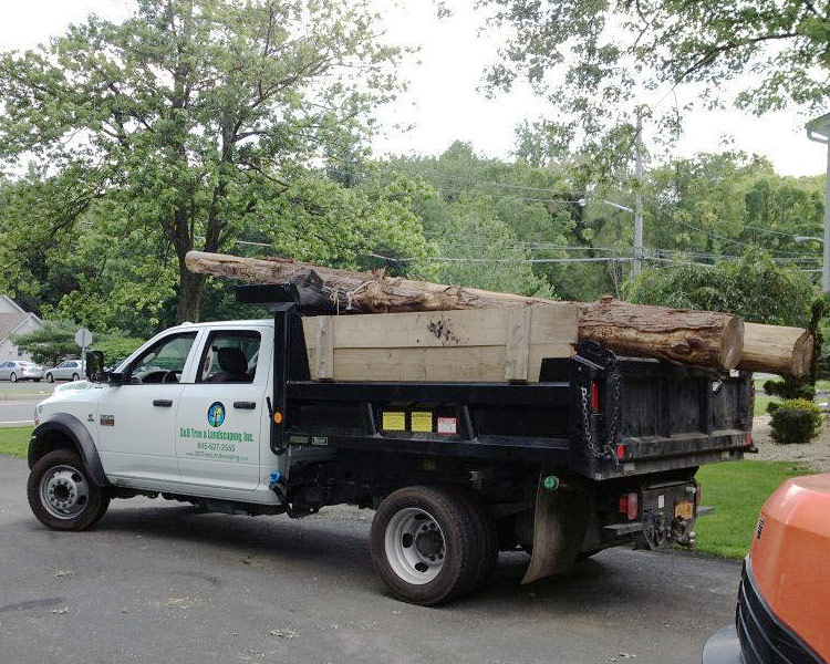 tree removal company in NY state