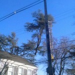 large tree removal in Rockland County